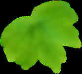 leaf-back